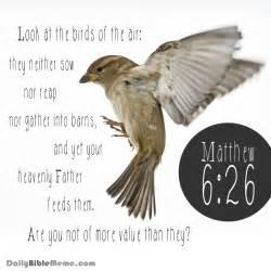 Daily Bible Meme - matthew 6 26 daily bible meme