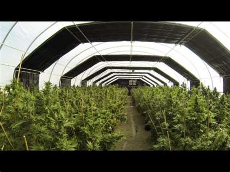 Light Deprivation by Light Deprivation System Greenhouse 8
