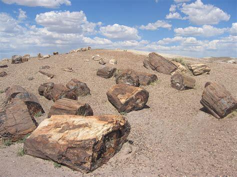 woodworking az file petrified forest national park wood jpg wikimedia