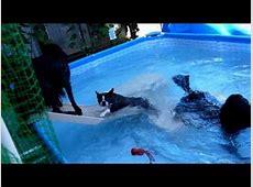 大型犬3頭と小型犬のプール遊び - YouTube K 1710