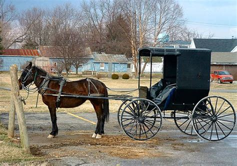 91 year dies after being run by amish