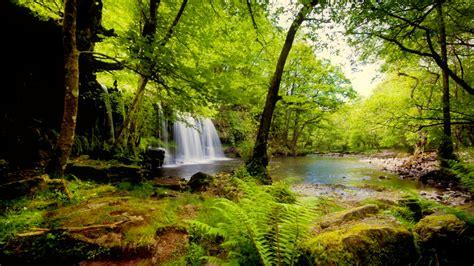 imagenes de naturaleza verdes tropical rainforest full hd fondo de pantalla and fondo de