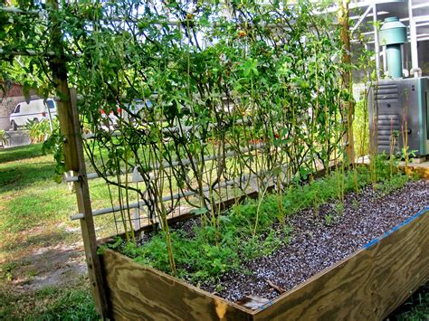 End Of The Growing Season In South Florida Florida Vegetable Gardening