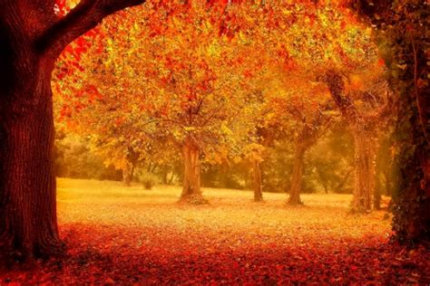 Other Nature november other nature background wallpapers on desktop