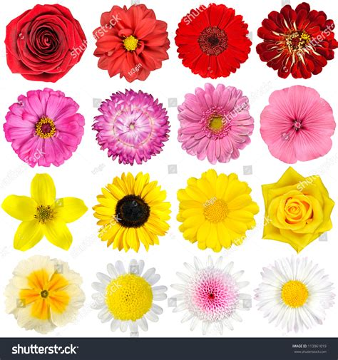 flowers by color big selection various flowers isolated on stock photo