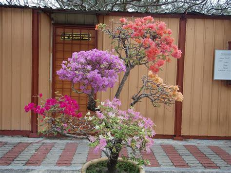 puteri manja landskap pokok bunga kertas