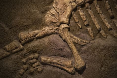 Who Find Dinosaur Bones New Models Predicting Where To Find Fossils Sciencedaily