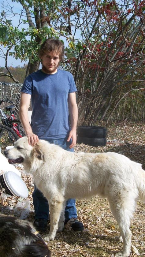 great pyrenees colors what color are great pyrenees color genetics