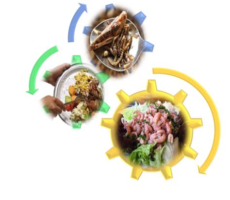 cadenas y redes y piramides alimenticias redes cadenas y piramides alimenticias un viaje