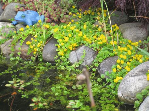 Click And Grow Amazon Need Advice For Creeping Water Plants To Cover Liner