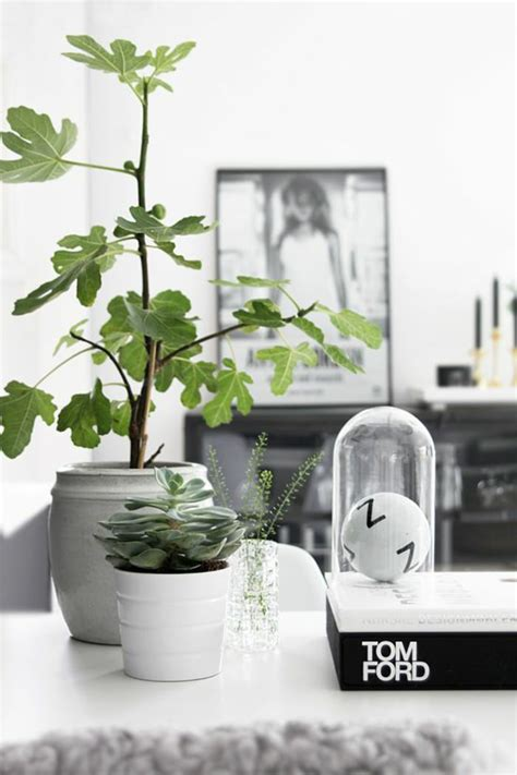 tree for home decoration 99 great ideas to display houseplants indoor plants