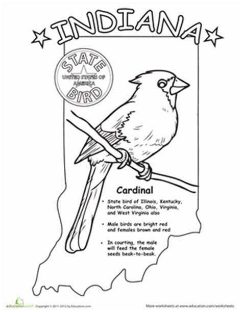 indiana coloring page indiana state bird worksheet education com