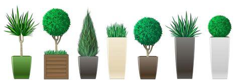 vasi alti per piante come scegliere i vasi per piante officina verde verona