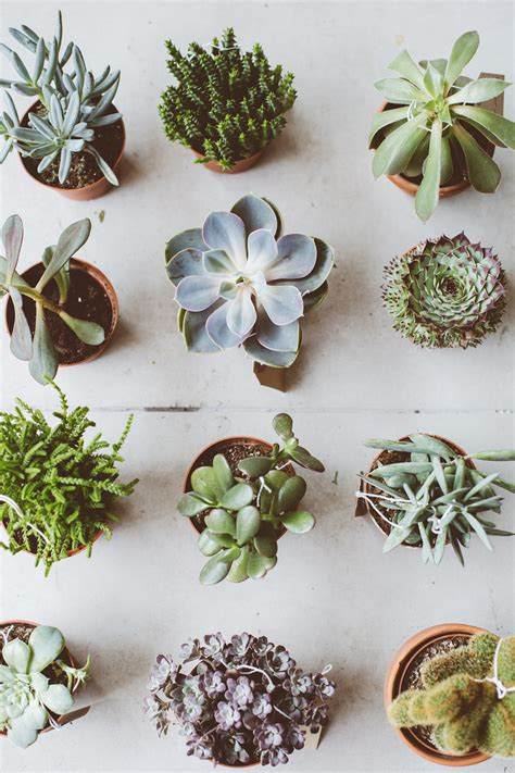 low light succulents houseplants toast botany pop up gardens discount codes and