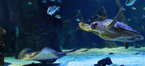 Aquarium Zoo Zoos And Aquariums You Re On The Canary Islands Tourism