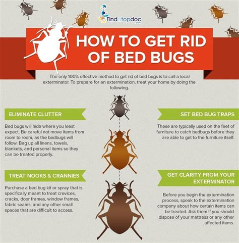 how to get rid of bedbugs fast