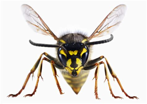 wasp images wasps just when you thought they couldn t get worse