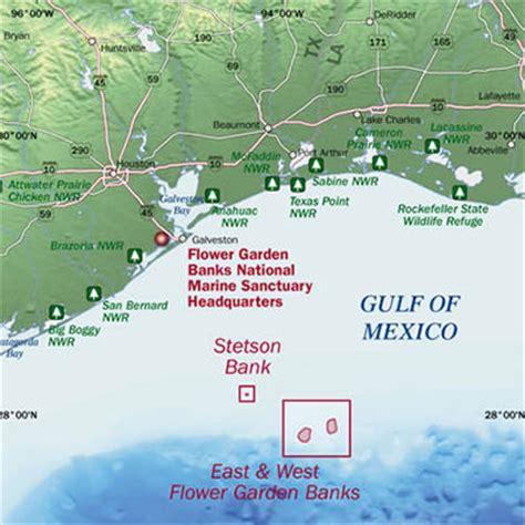 Gulf Of Mexico Flower Gardens Flower Garden Banks Gulf Flower Garden Banks National Marine Sanctuary