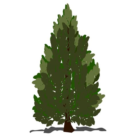 pine tree clipart pine tree