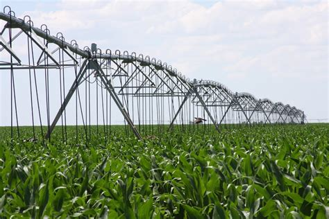irrigated corn texas agriculture law year in review part i water