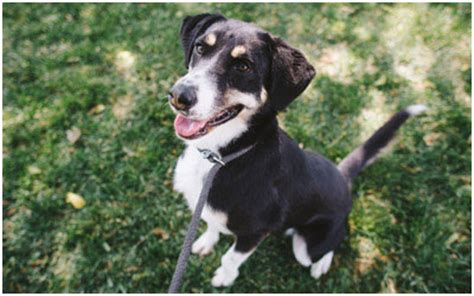 wayside waifs dogs puppy classes classes kansas city wayside waifs wayside waifs