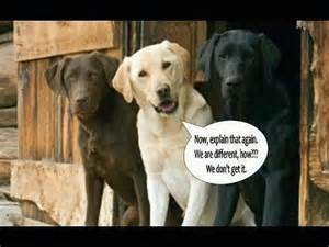 labrador colors dogs don t worry about color history