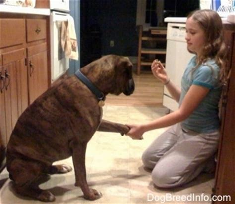 dogs and humans dogs and human emotions