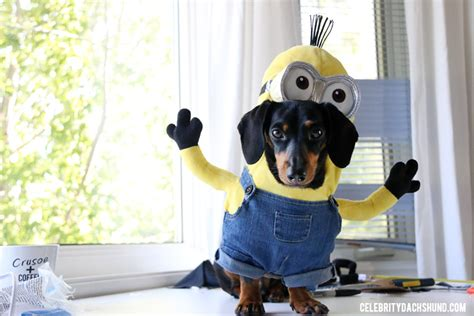 minion costumes for dogs how to make a minions costume for small dogs crusoe the dachshund