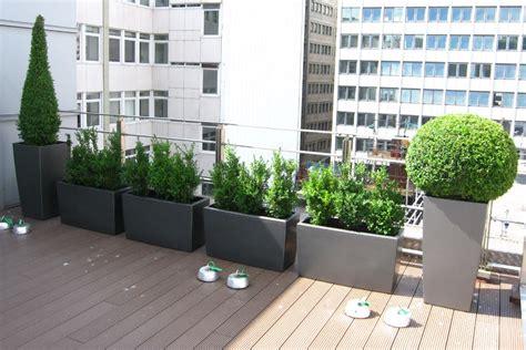 roof garden plants topiary roof garden for birmingham firm office