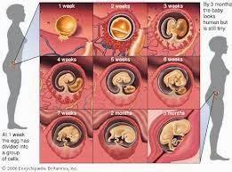Tips Melakukan Gugur Janin Usia 8 Bulan Cara Menghitung Usia Kehamilan Dan Waktu Lahir Rumus