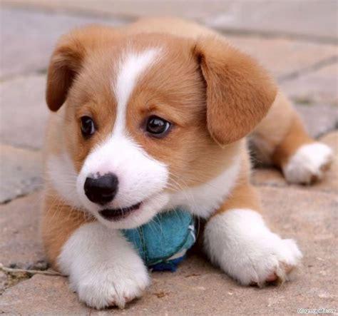 top cute dog pictures gallery heartworm medicine