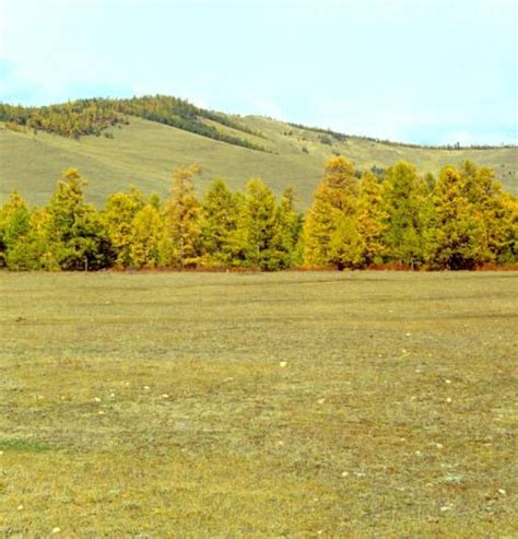 wann schneidet bã ume pixwords das bild mit natur landschaft berg berge baum