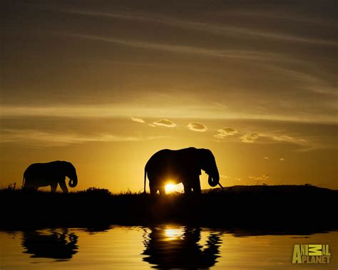 beautiful pictures  elephant  hd