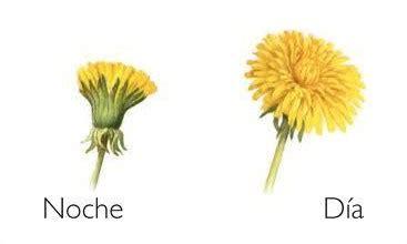 imagenes de flores que abren de noche las flores se cierran por las noches 191 por qu 233