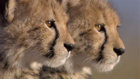 imagenes de animales salvajes de africa im 225 genes de animales salvajes de 193 frica