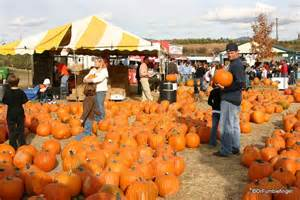 Gumbo S Pic Of The Day October 31 2015 The Pumpkin | gumbo s pic of the day october 31 2015 the pumpkin