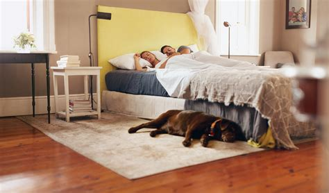 dogs sleeping in bedroom 4 easy ways to get better sleep right now factor75 blog