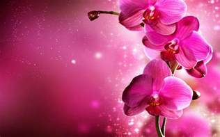 pink orchids pink orchid flowers free wallpaper