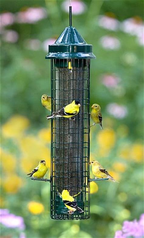 squirrel buster plus bird feeder with weather guard