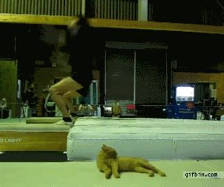cat rage room wogymnastika a gymnast scares a cat after landing his twisting tuck gif
