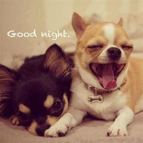 Goodnight Meme Cute - puppy dog says good night good night pinterest good
