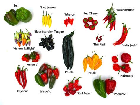 types of garden peppers herb garden peppers a selection of peppers from bbg s