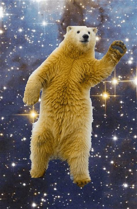 Dancing Polar Bear Meme - polar bear dance gif find share on giphy