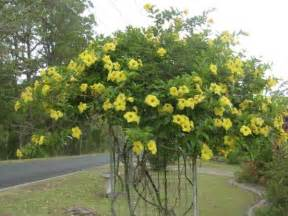 Fast Growing Climbing Plants For Fences - plant finder search results page 1 search criteria climbing plant
