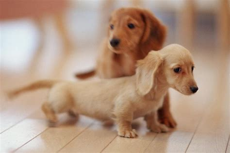 cutest puppy 15 cutest puppies that will melt your barking royalty