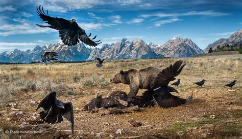 T Shirt Nat Geo Photographer the most nature photos of 2016 from the