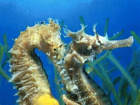 imagenes de la vida bajo el mar fotos de animales vida bajo el mar