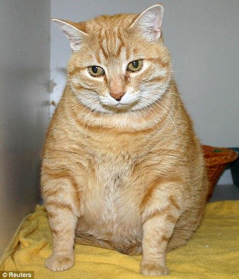 the human psyche and the pet obesity epidemic half of us cats and dogs overweight or obese time to get