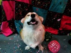 new year gifs happy new year gif find on giphy
