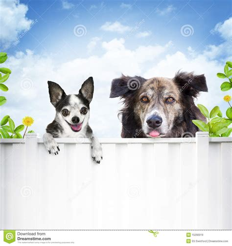 looking for free puppies dogs looking fence royalty free stock images image 15290019